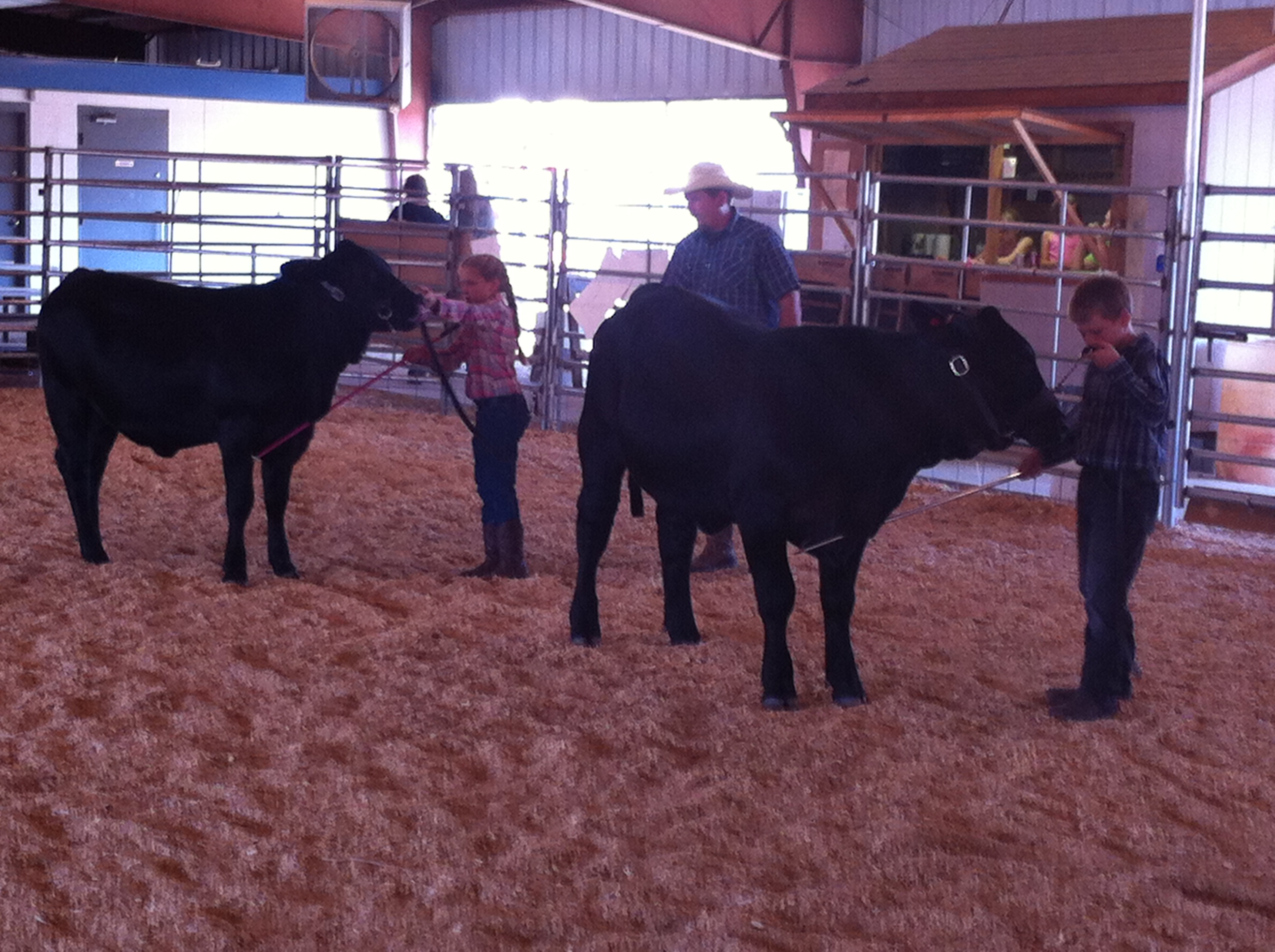 Big D Ranch Show Ring