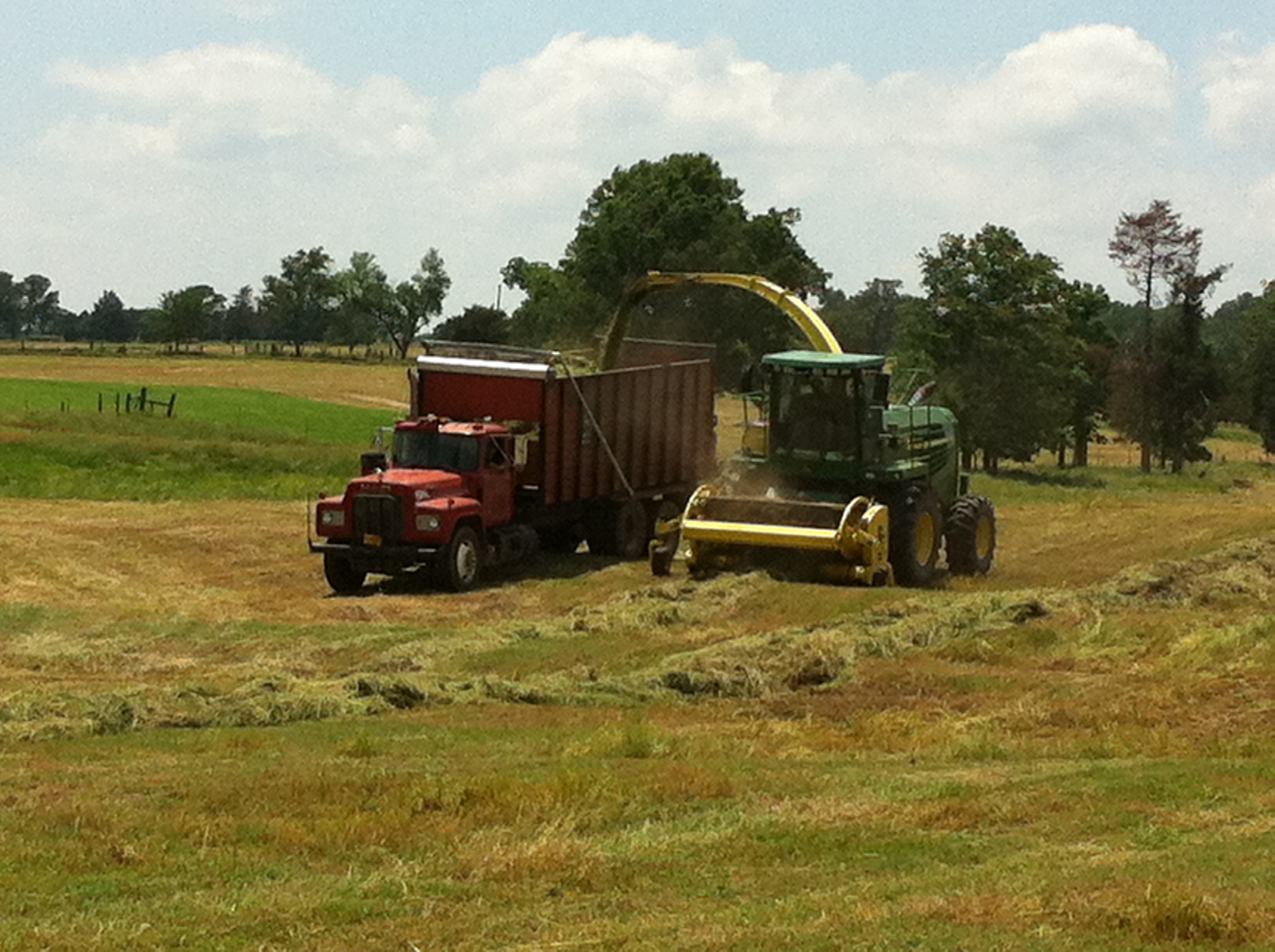 Big D Ranch Silage