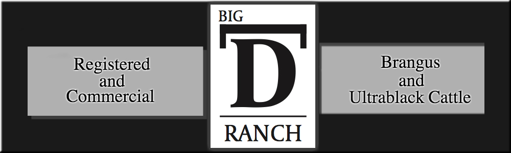 Big D Ranch